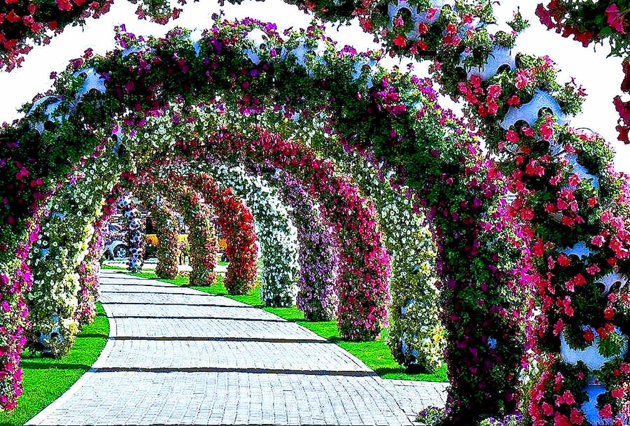 Сад цветов - Все о лилейниках и ирисах